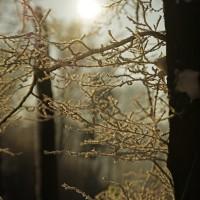 Tenhle strom se asi v lété spustil s nějakým ježkem a výsledkem tohoto mimodruhového křížení jsou větvičky s bodlinkama :)