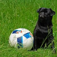 Fotbal je přízemní hra pro primitivy, nebo tak maximálně pro čivavy. My šampióni samozřejmě hrajeme buď golf nebo polo :)