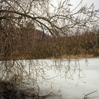 """Příroda zmatená jak Goro před Tokijem, nad zamrzlým demo-rybníčkem košaté a rozkvetlé kočíčky. Ten den bylo cca 2 stupně nad a padal zmrzlý déšt, takže zamrzlej rybník """"byl v právu"""" a kočičky předběhly dobu :)"""