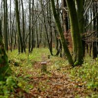 Patníky v lese nejsou pro potěchu pejskařů aby jejich miláčci měli co občůrávat, to je prosím pěkne státní hranice :)